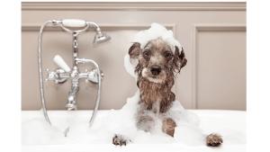 How Often Should I Bathe My Dog