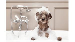 why dog go crazy after bath