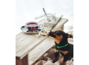 Read more about the article Keep your Dog away from these TOP 10 POISONS