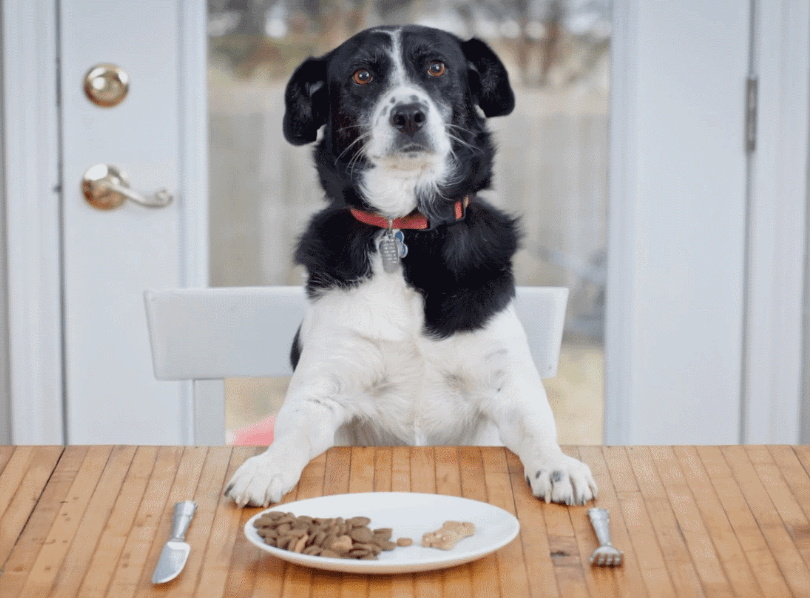 Read more about the article How to Choose Dog Food