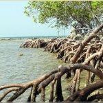 Los estuarios y sus problemas ambientales (segunda parte)