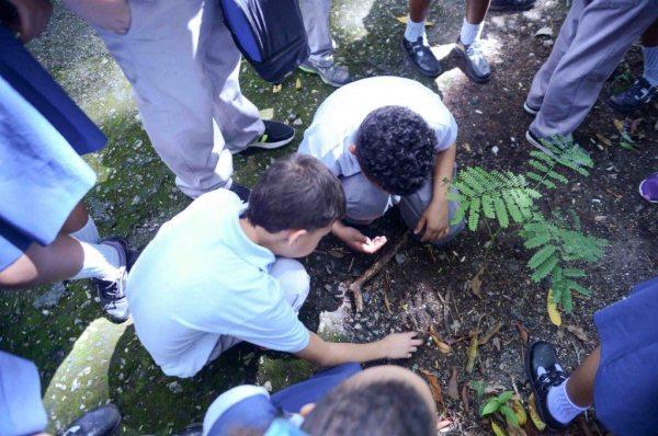 Es la primera vez en Puerto Rico que se establece una cantidad mínima de horas contacto con la naturaleza por cada semestre para que los estudiantes visiten áreas naturales protegidas o participen en actividades de aprendizaje o voluntariado a favor del medioambiente.