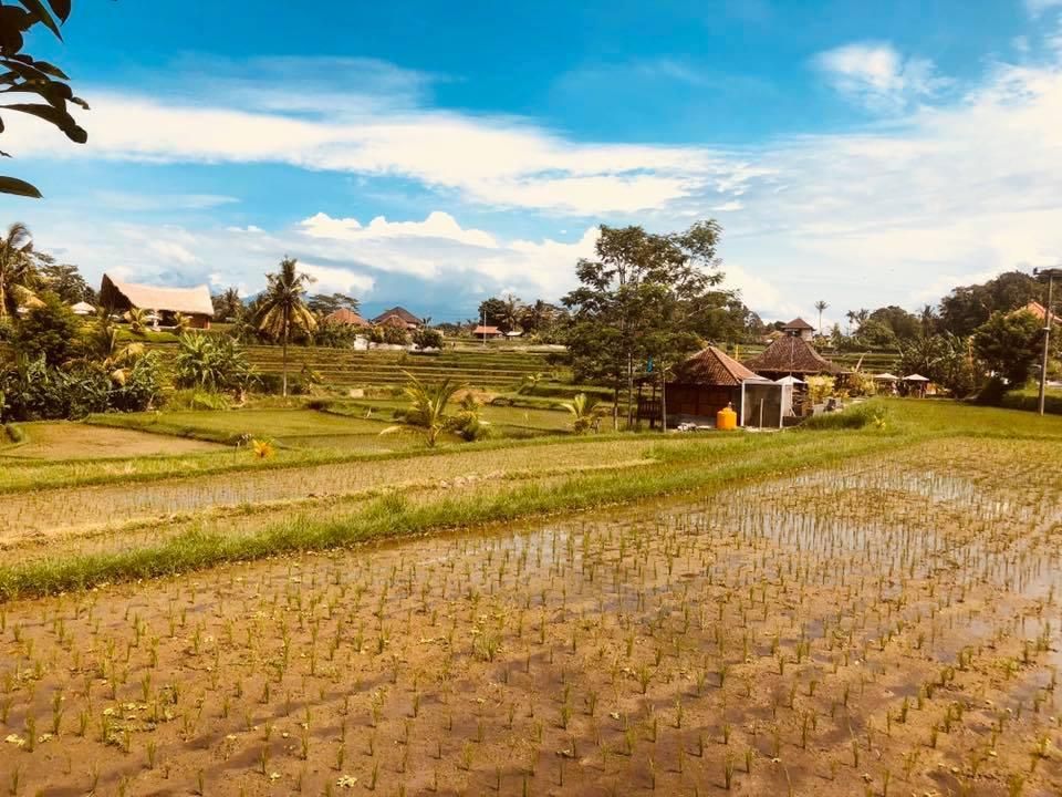 Planning the perfect honeymoon in Bali Part 1: Ubud
