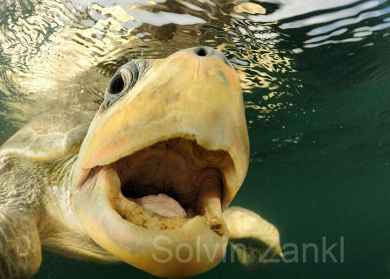 """Ein Meeresfotograf macht """"berauschende"""" Bilder"""
