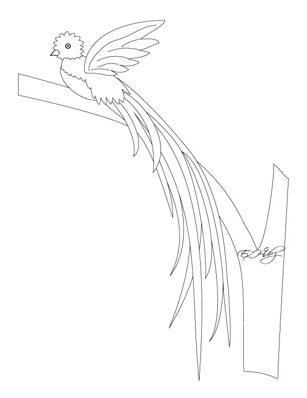 Dibujos Para Colorear De Quetzal