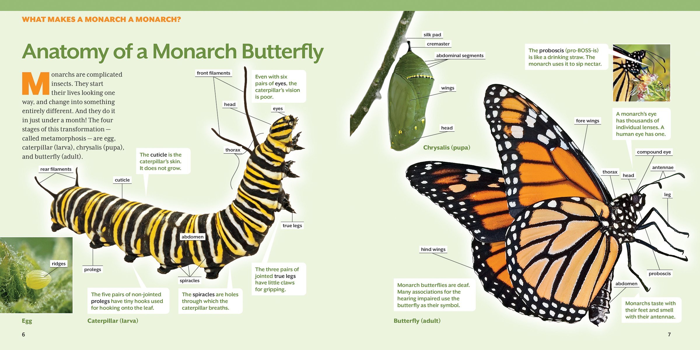 How To Raise Monarch Butterflies Book