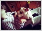 Progetto Pet Therapy con ASL e Fondazione Maddalena Grassi