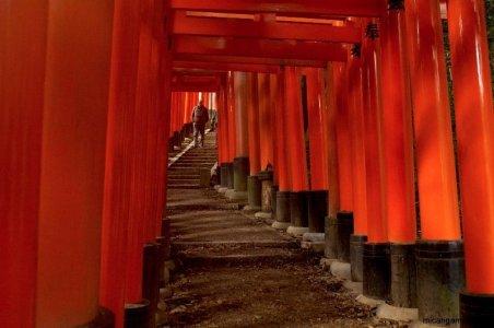 fushimi-inari-torii-kyoto-micah-gampel-2010
