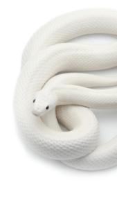 白蛇 画像 効果