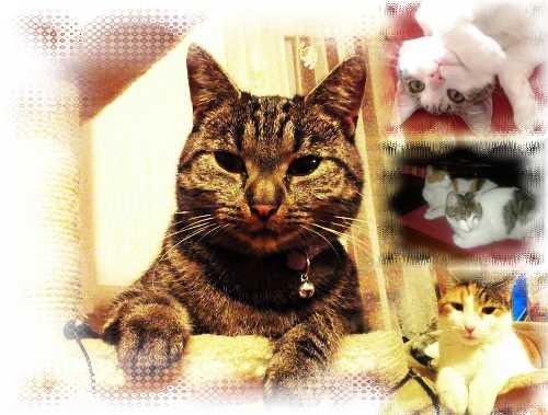 Katzenbastelbild
