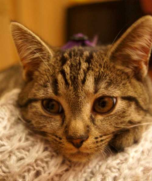 Katzenkind Lulu (5/6)