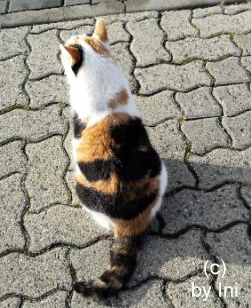 Katze in unserer Straße
