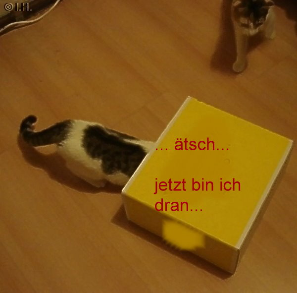 Bienchen und Fienchen, Spiel mit dem Karton Jan.2011