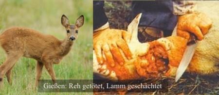 Reh+Lamm