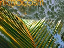 microscosm