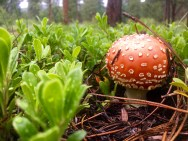 Mario would be jelly of this mushroom.