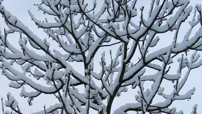 ny-snow_03