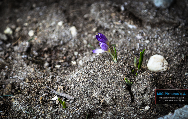 Fb: Ostern: Auferstehung beobachten. – Impuls-Reihe Teil 17/Osterzeitimpuls – Lange Nacht der Kirchen