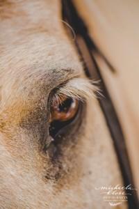 Fotoshooting mit Pferd in der Abendsonne Toskana Wiese Islandpony Reiterin Romantisch