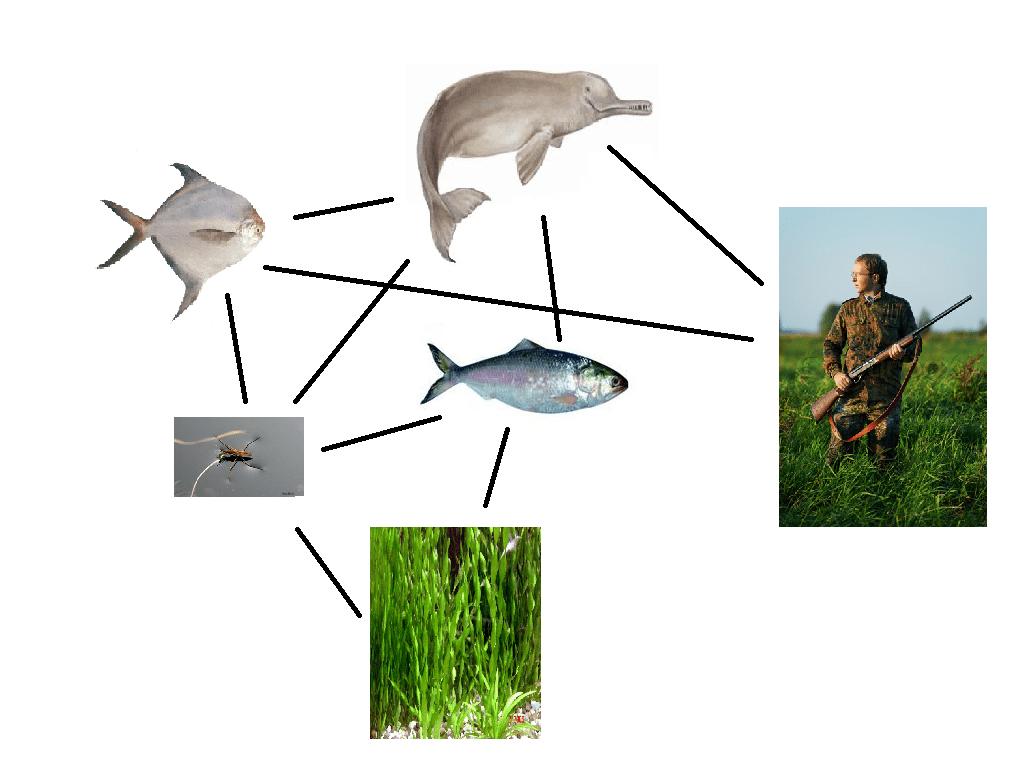 River Food Web Worksheet