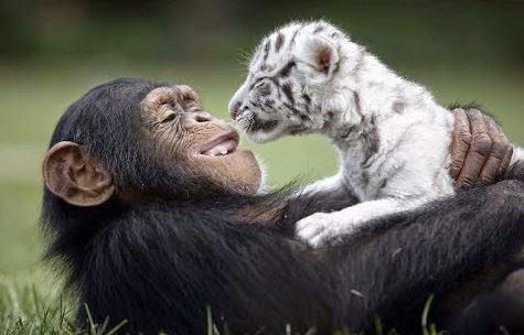 weird animal friends