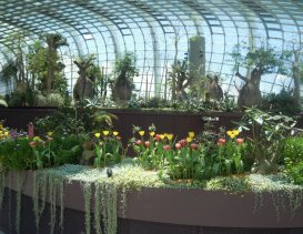 Tulips in Flower Dome