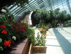Flower Dome area