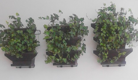 Wall inside has ivy growing