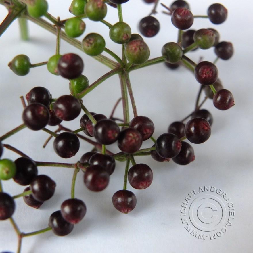 Sauco Berries