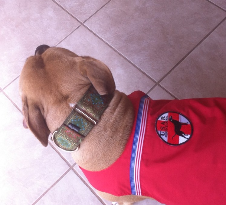 Lady Brue is a service dog!