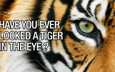 MINDSET MATTERS: THE CONVICTION OF A TIGER