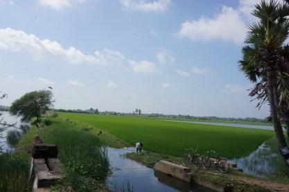 Cauvery River Delta