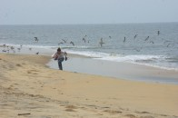 Running from Seagulls