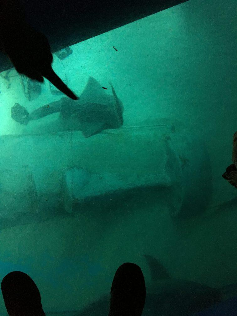 Sharks under foot, London Aquarium