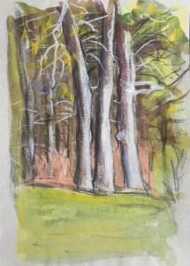 Trees, Johns Bay, Pemaquid, 2015