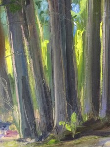 Detail: Trees, 4 pm, Clinton Corners, May 11th, 2019