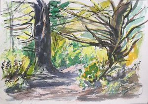 Forest Pathway, Otter Point, 2009