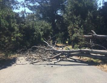 Fallen tree, July 8th, 2019