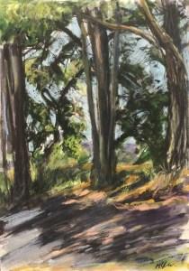 Trees, Gualala Point Regional Park, July 7th, 2019