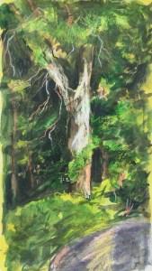 Tree, Clinton Corners, Spring, 2016