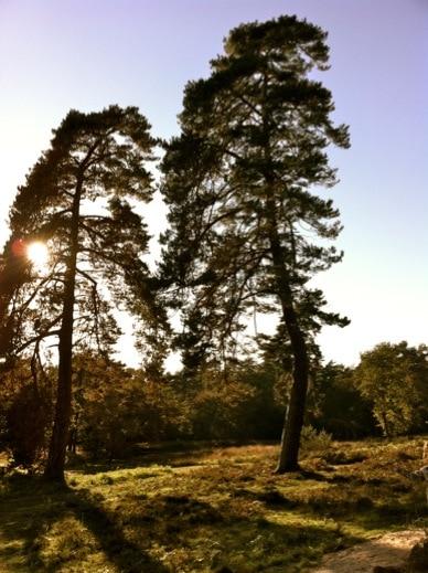 Ein wunderschöner Tag in der Wahner Heide