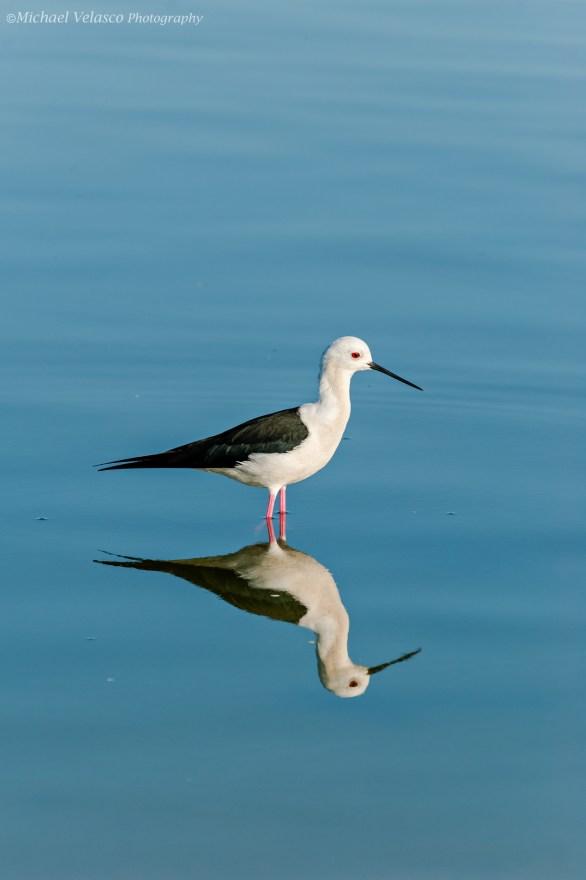 Stilt reflecting