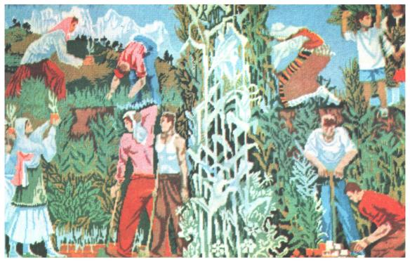 The planting of cubes of maize - Stavri Cati