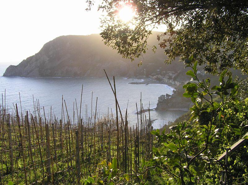 The sun setting over Italian vineyards.