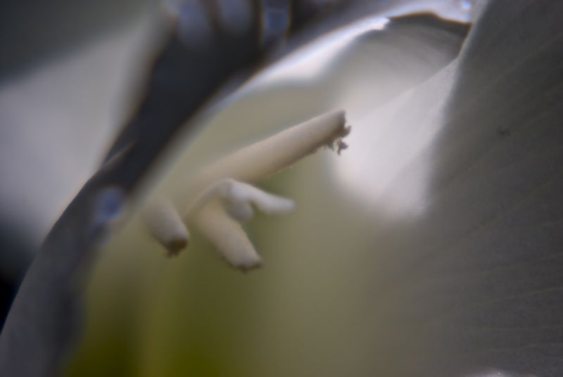 A white flower shot using a +3 macro filter at 200mm on a 55-200mm lens.
