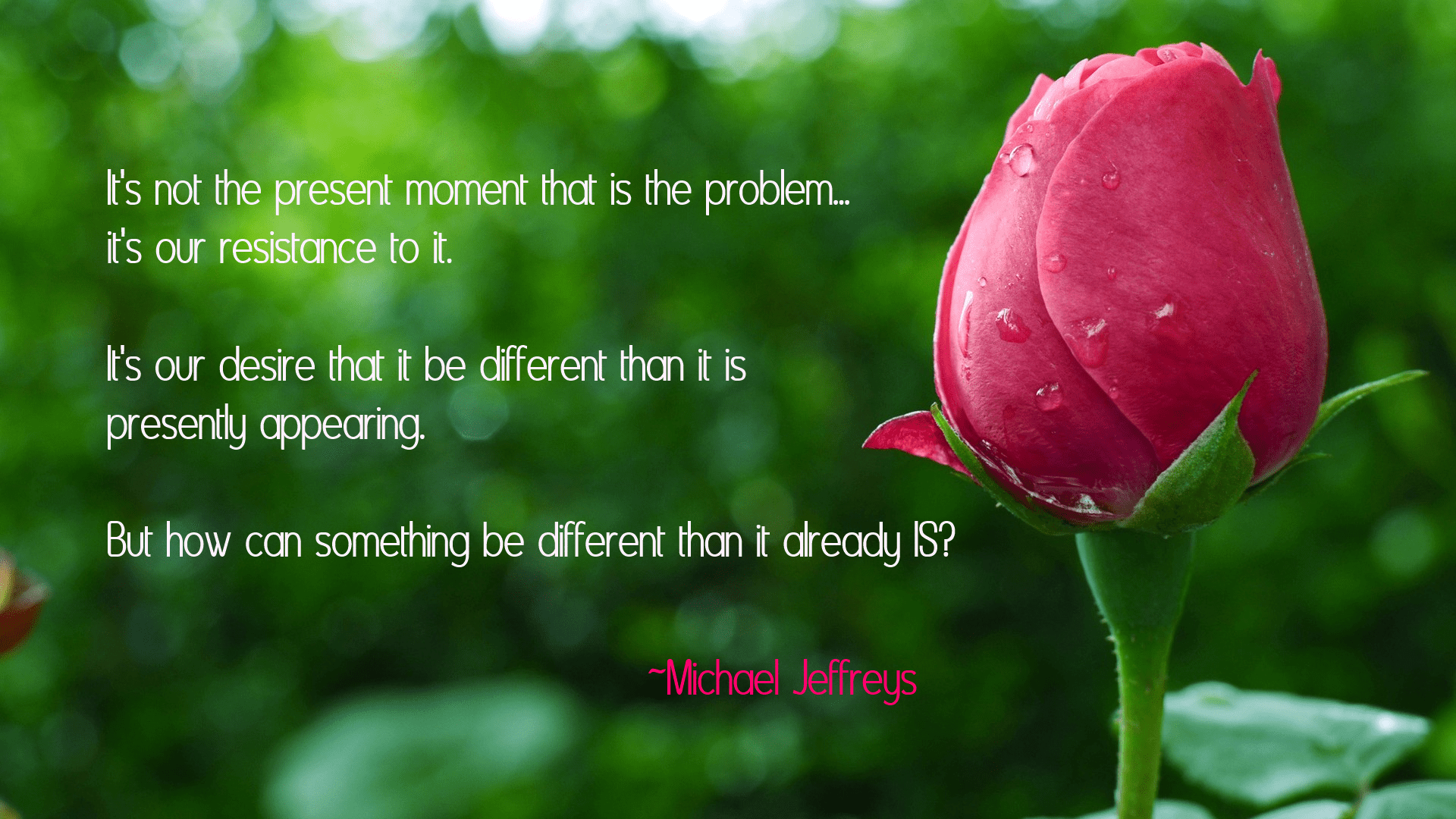 Beautiful Roses Wallpapers With Quotes It S Resistance Not The Present Moment That Causes