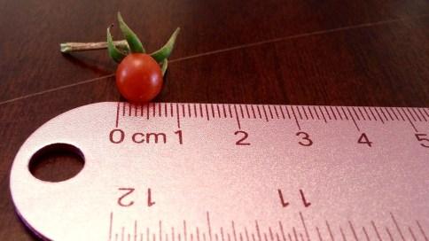 tomato-1560267_960_720