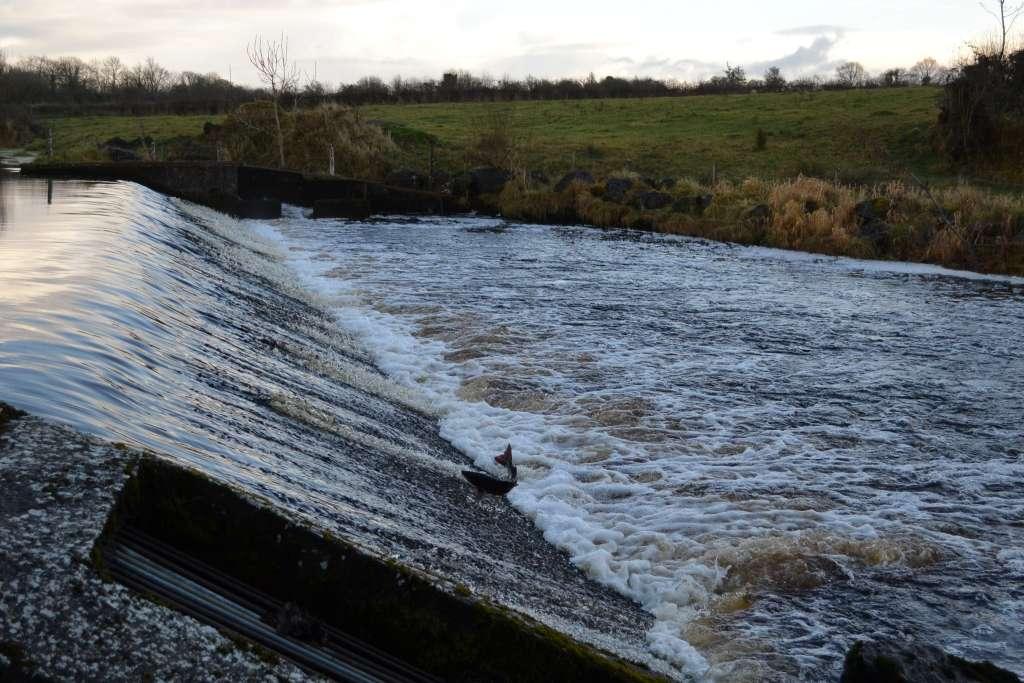 Salmon run on Curry river