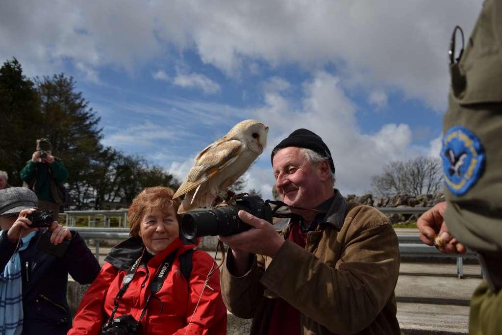 Owl posing for photos