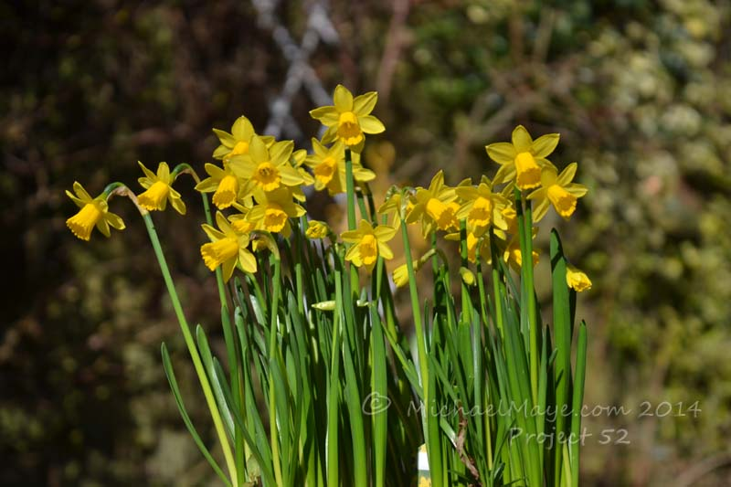 Spring Has Sprung – Project 52 #10